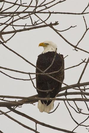 Eyeballing Eagle