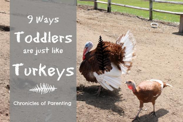 toddlers are like turkeys